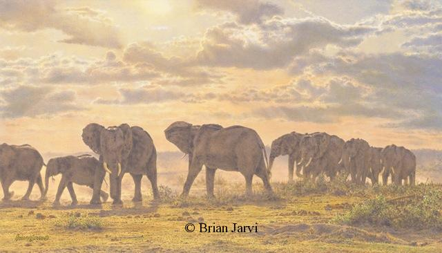 "Across Open Ground - African Elephants <br> Original Oil 16"" x 26"" <B><font size=""2"" color=""red""><br>This Original has been sold and is in a private collection</font></B> - Brian Jarvi Studios African Wildlife Original Art Brian Jarvi Artwork"