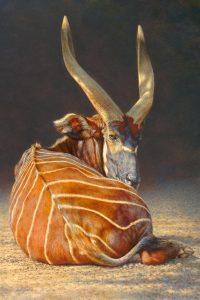 Bongo Study - Brian Jarvi Studios Africana African Continent