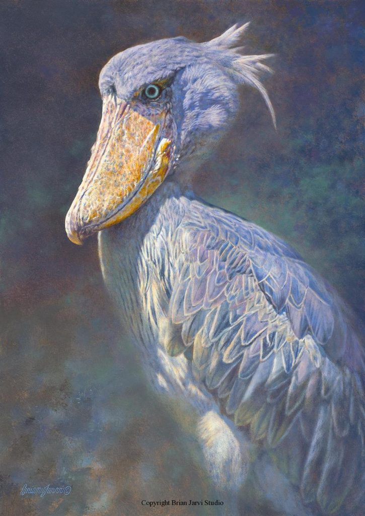 """Prehistoria-African Shoebill <br> Size: 17""""x 24"""" - Sold <B><font size=""""2"""" color=""""red""""><br>This Original has been sold and is in a private collection</font></B> - Brian Jarvi Studios Studies for African Menagerie Paintings Brian Jarvi Originals"""