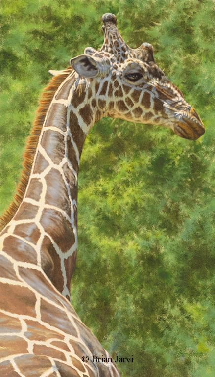 """Amazing Grace <br>Original Oil 16"""" x 28"""" <B><font size=""""2"""" color=""""red""""><br>This Original has been sold and is in a private collection</font></B> - Brian Jarvi Studios African Wildlife Original Art Brian Jarvi Artwork"""