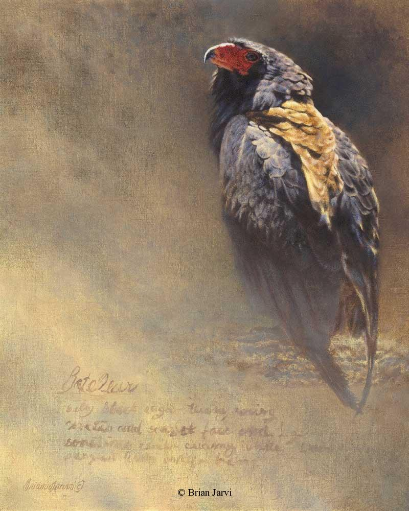 "Bateleur Study <br> Selected for Birds In Art 2011 Tour <B><font size=""2"" color=""red""><br>This Original is available.<br>Please call Brian at (218)  259-1333 for pricing information.</font></B> - Brian Jarvi Studios African Wildlife Original Art Brian Jarvi Artwork"