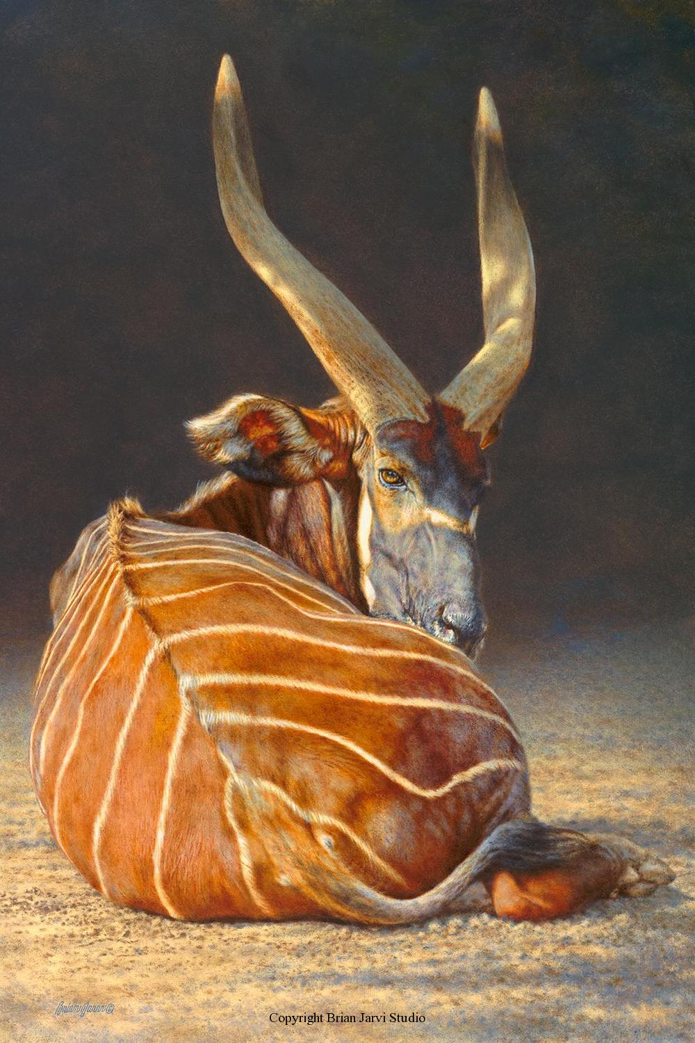 "Bongo Study Original Oil 24"" x 36"" - Sold <B><font size=""2"" color=""red""><br>This Original has been sold and is in a private collection</font></B> - Brian Jarvi Studios Studies for African Menagerie Paintings Brian Jarvi Originals"