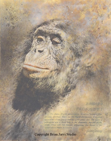 "Bonobo Chimp Study <br>11""x14"" Original Oil - Sold <B><font size=""2"" color=""red""><br>This Original has been sold and is in a private collection</font></B> - Brian Jarvi Studios Studies for African Menagerie Paintings Brian Jarvi Originals"