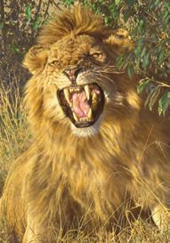 - Brian Jarvi Studios Paintings of one hundred forty African Species Collection of 140 paintings of African Species