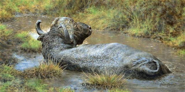 "Voted 2011 Society of Animal Artists Award of Excellence.<br> ""Buffalo Spa"" <br> Original Oil 10"" x 20"" <B><font size=""2"" color=""red""><br>This Original has been sold and is in a private collection</font></B> - Brian Jarvi Studios African Wildlife Original Art Brian Jarvi Artwork"