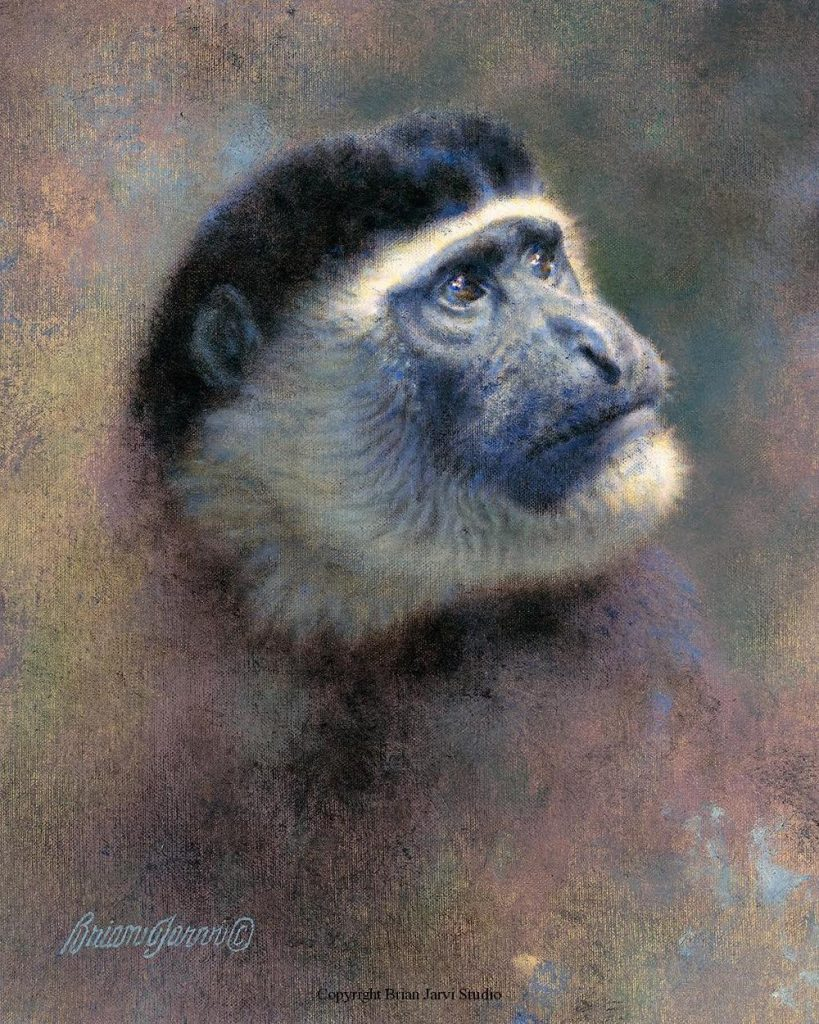 """Colobus Head Study - 8"""" x 10"""" - Sold <B><font size=""""2"""" color=""""red""""><br>This Original has been sold and is in a private collection</font></B> - Brian Jarvi Studios Studies for African Menagerie Paintings Brian Jarvi Originals"""