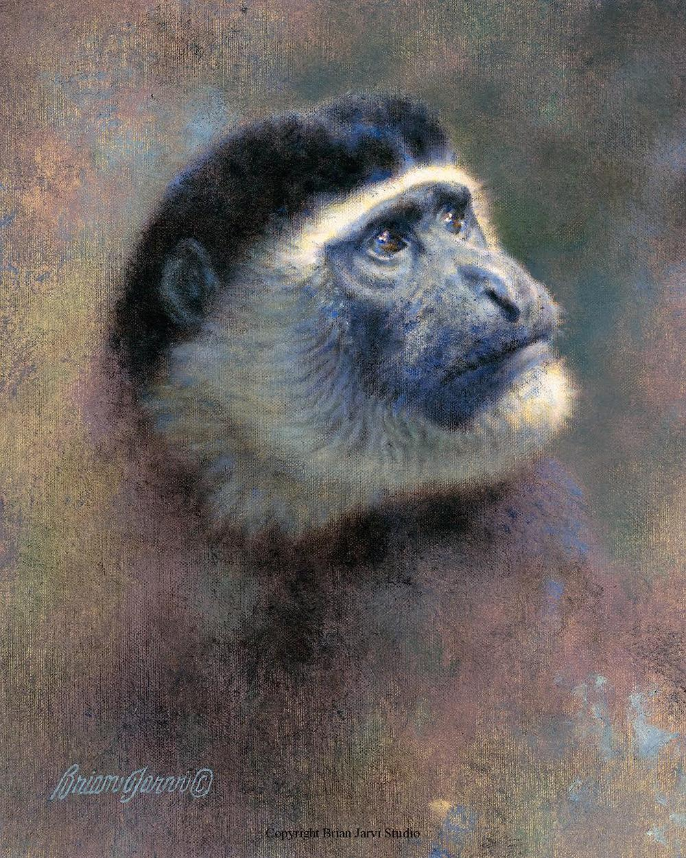 "Colobus Head Study - 8"" x 10"" - Sold <B><font size=""2"" color=""red""><br>This Original has been sold and is in a private collection</font></B> - Brian Jarvi Studios Studies for African Menagerie Paintings Brian Jarvi Originals"
