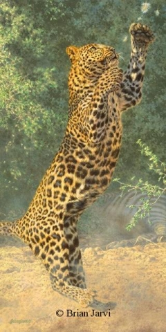 """Defending the Cache - African Leopard <br> Original Oil 36"""" x 18"""" <B><font size=""""2"""" color=""""red""""><br>This Original has been sold and is in a private collection</font></B> - Brian Jarvi Studios African Wildlife Original Art Brian Jarvi Artwork"""