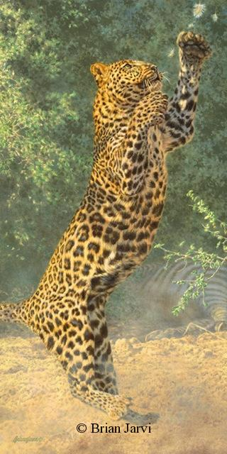 "Defending the Cache - African Leopard <br> Original Oil 36"" x 18"" <B><font size=""2"" color=""red""><br>This Original has been sold and is in a private collection</font></B> - Brian Jarvi Studios African Wildlife Original Art Brian Jarvi Artwork"