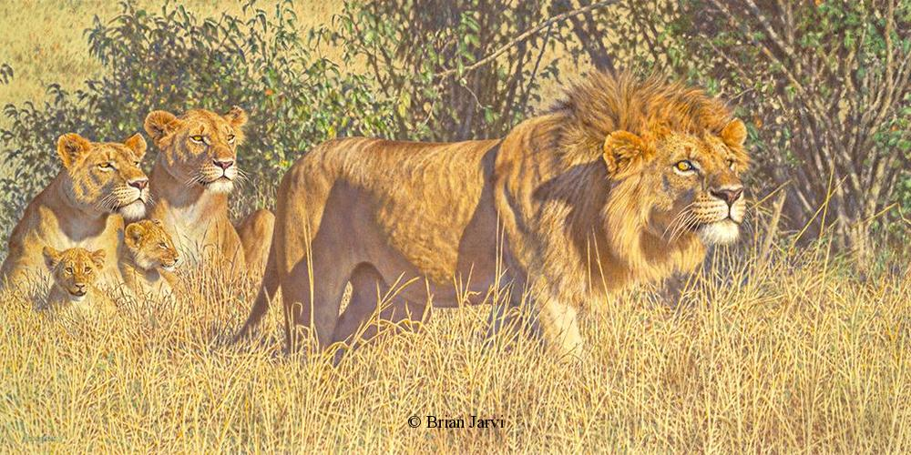 "Defense of the Realm - African Lions <br> Original Oil 36"" x 72"" <B><font size=""2"" color=""red""><br>This Original has been sold and is in a private collection</font></B> - Brian Jarvi Studios African Wildlife Original Art Brian Jarvi Artwork"