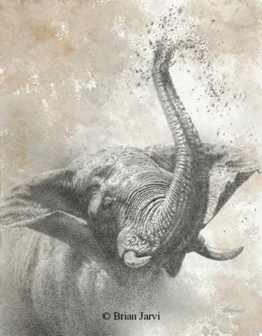 "Elephant Bliss <br> Original Charcoal 23"" x 18"" <B><font size=""2"" color=""red""><br>This Original is available.<br>Please call Brian at 218-259-1333 for pricing information.</font></B> - Brian Jarvi Studios African Wildlife Original Art Brian Jarvi Artwork"