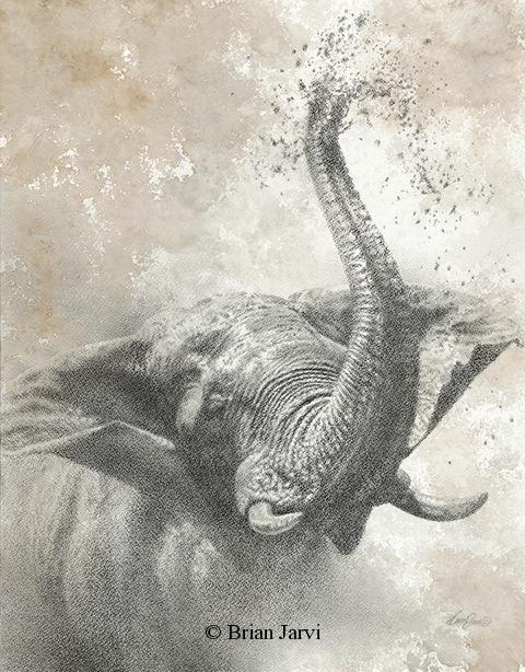 "Elephant Bliss <br> Original Charcoal 23"" x 18"" <B><font size=""2"" color=""red""><br>This Original is available.<br>Please call Brian at (218) 326-1308 for pricing information.</font></B> - Brian Jarvi Studios African Wildlife Original Art Brian Jarvi Artwork"