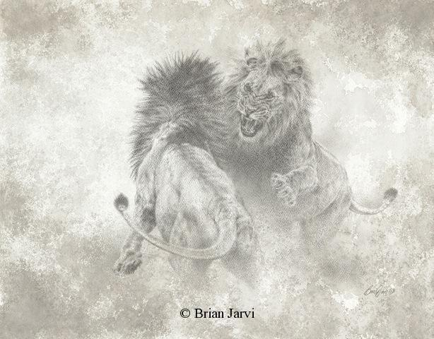 "Fighting Lions <br> Original Charcoal 18"" x 23"" <B><font size=""2"" color=""red""><br>This Original has been sold and is in a private collection</font></B> - Brian Jarvi Studios African Wildlife Original Art Brian Jarvi Artwork"