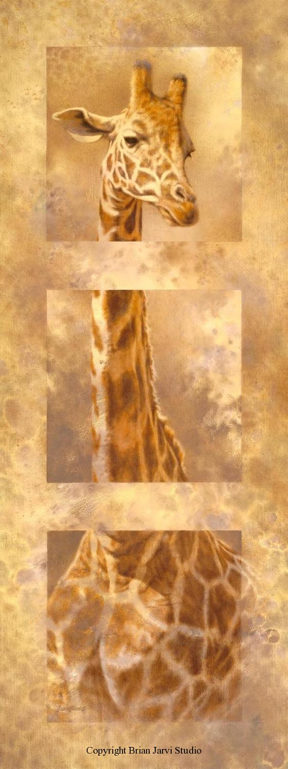"Giraffe Tritpych 18"" x 48"" - Sold <B><font size=""2"" color=""red""><br>This Original has been sold and is in a private collection</font></B> - Brian Jarvi Studios Studies for African Menagerie Paintings Brian Jarvi Originals"