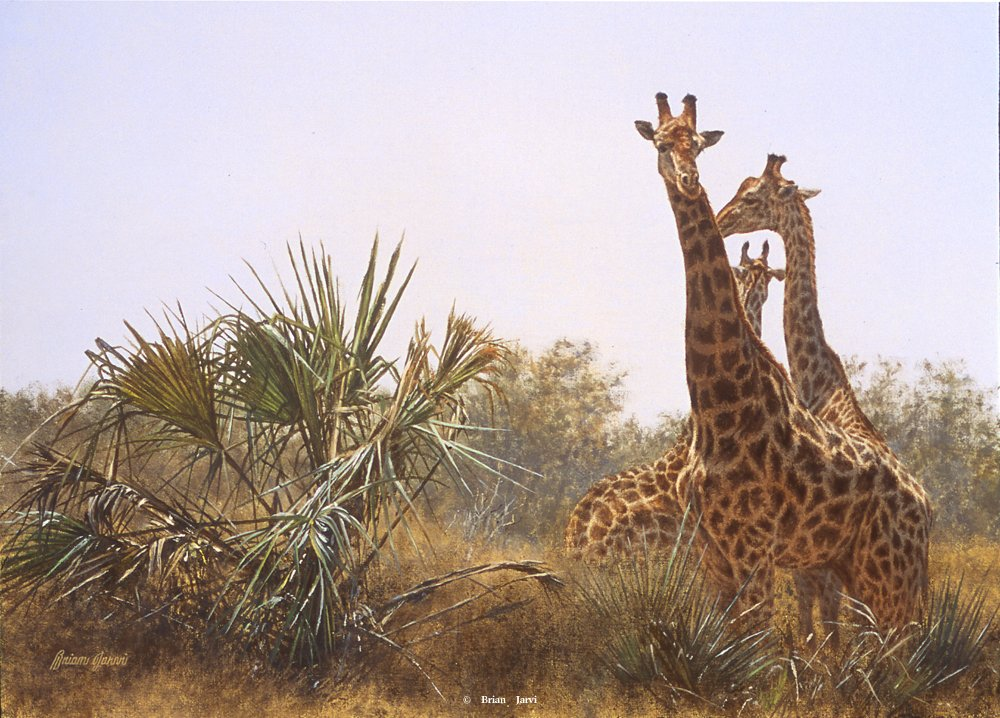 """Giraffes and Lala Palms"""