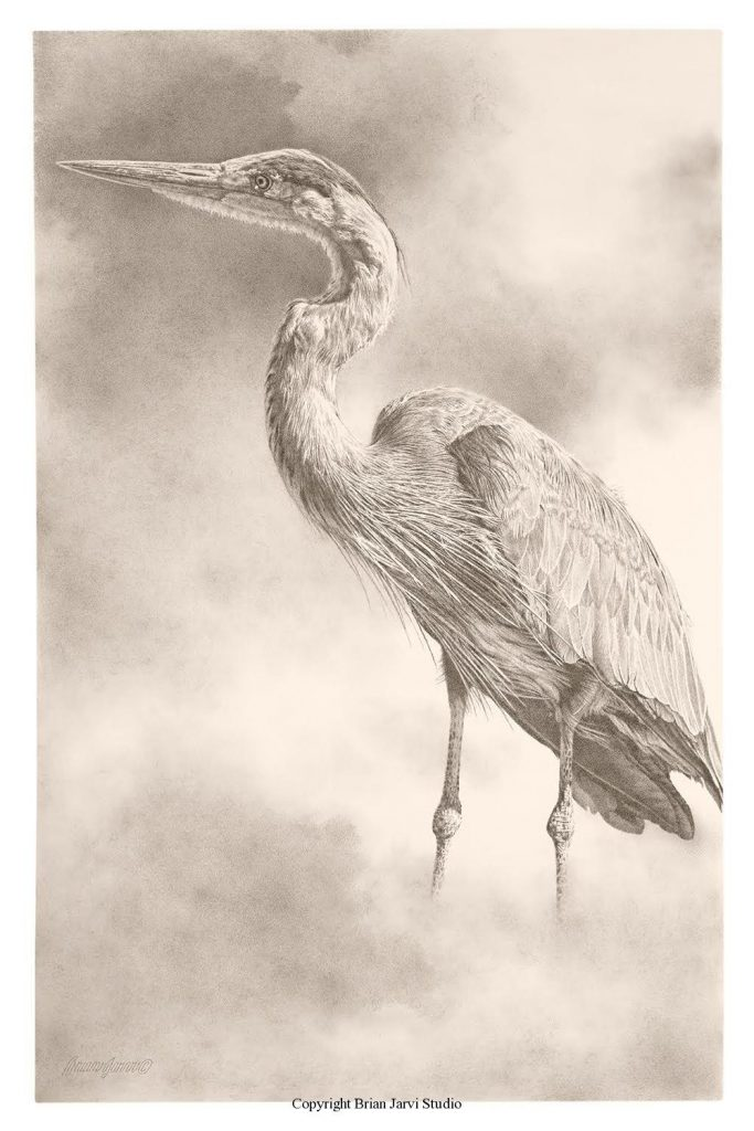 """Grey Heron Study - 24"""" x 36"""" - Sold <B><font size=""""2"""" color=""""red""""><br>This Original has been sold and is in a private collection</font></B> - Brian Jarvi Studios Studies for African Menagerie Paintings Brian Jarvi Originals"""
