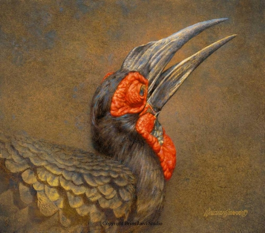 "Ground Hornbill Study 14"" x 16"" - Brian Jarvi Studios Studies for African Menagerie Paintings Brian Jarvi Originals"