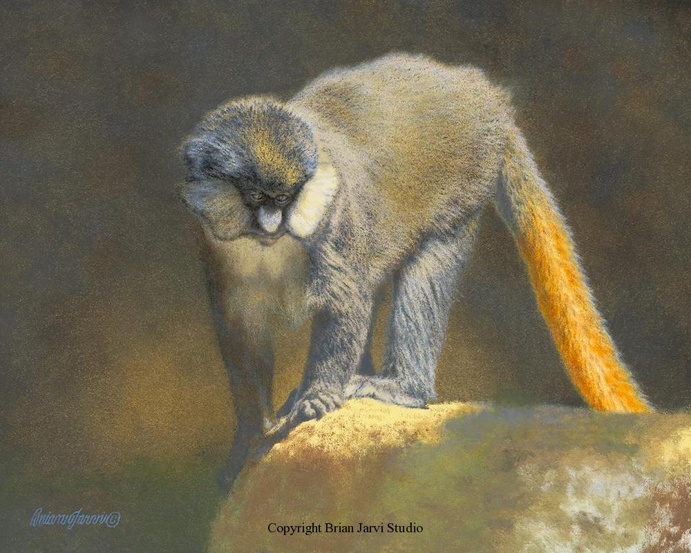 "Guenon - Pre-Study<br> 16""x20"" Original Oil <B><font size=""2"" color=""red""><br>This Original is available.<br>Please call Brian at (218) 326-1308 for pricing information.</font></B> - Brian Jarvi Studios Studies for African Menagerie Paintings Brian Jarvi Originals"