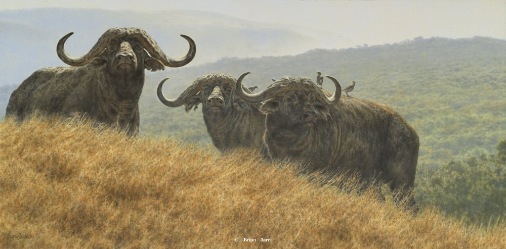 """High Plains Drifters"" – Cape Buffalo"