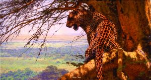 "Highlander - Big Five Leopard - Brian Jarvi Studios Brian Jarvi Art African Wildlife ""Big Five"""