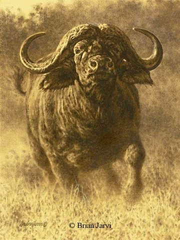 """In the Crosshairs - (Study) <B><font size=""""2"""" color=""""red""""><br>This Original has been sold and is in a private collection</font></B> - Brian Jarvi Studios African Wildlife Original Art Brian Jarvi Artwork"""
