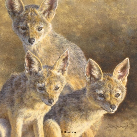 "Jackal Pups <br>Original Oil 12 X 12"" <B><font size=""2"" color=""red""><br>This Original has been sold and is in a private collection</font></B> - Brian Jarvi Studios African Wildlife Original Art Brian Jarvi Artwork"
