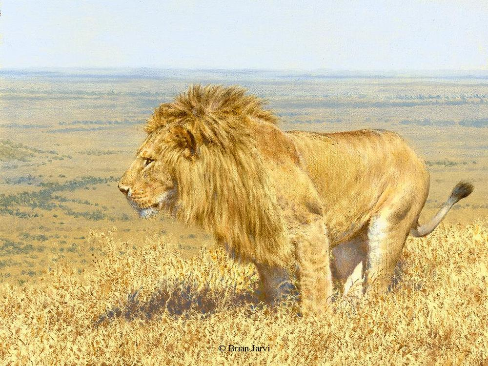 "Kingdom - African Lion <br> Original Oil 9"" x 12"" <B><font size=""2"" color=""red""><br>This Original has been sold and is in a private collection</font></B> - Brian Jarvi Studios African Wildlife Original Art Brian Jarvi Artwork"