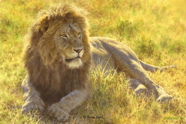 "King of Kings - African Lion<br> Original Oil 20"" x 30"" <B><font size=""2"" color=""red""><br>This Original has been sold and is in a private collection</font></B> - Brian Jarvi Studios African Wildlife Original Art Brian Jarvi Artwork"