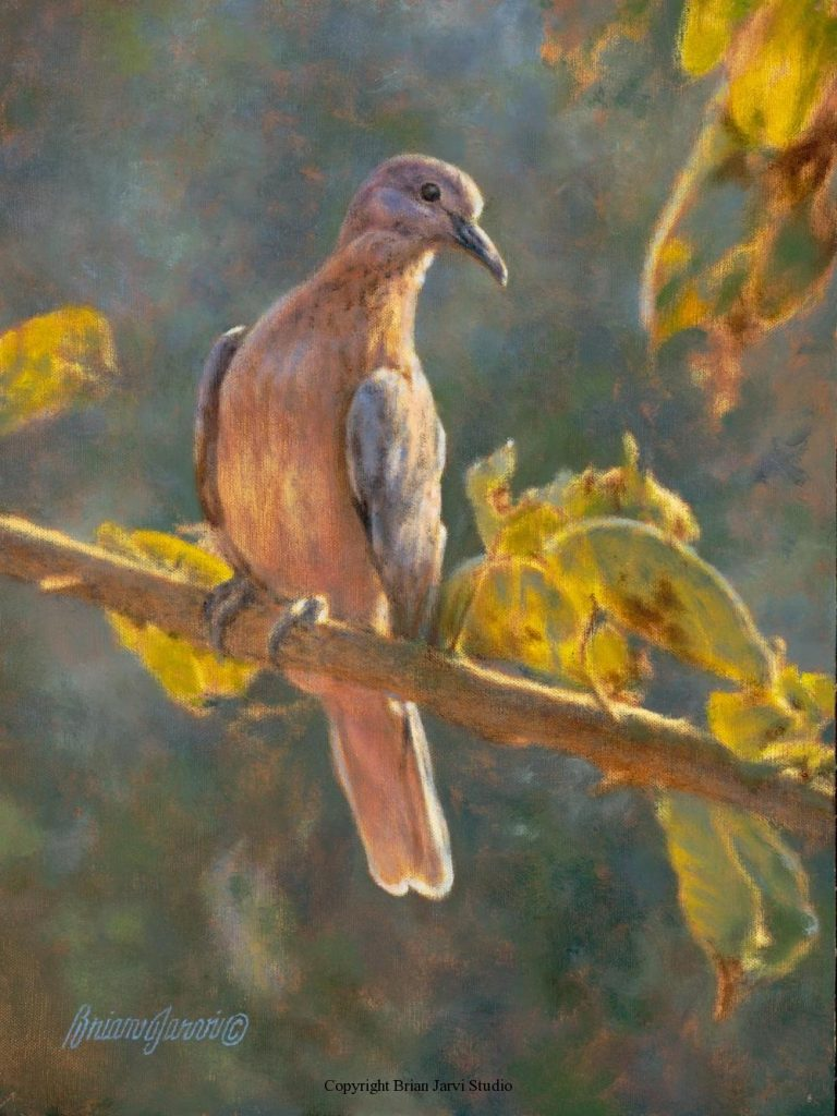 """Laughing Dove Pre-Study 9"""" x 12"""" <B><font size=""""2"""" color=""""red""""><br>This Original is available.<br>Please call Brian at (218) 326-1308 for pricing information.</font></B> - Brian Jarvi Studios Studies for African Menagerie Paintings Brian Jarvi Originals"""