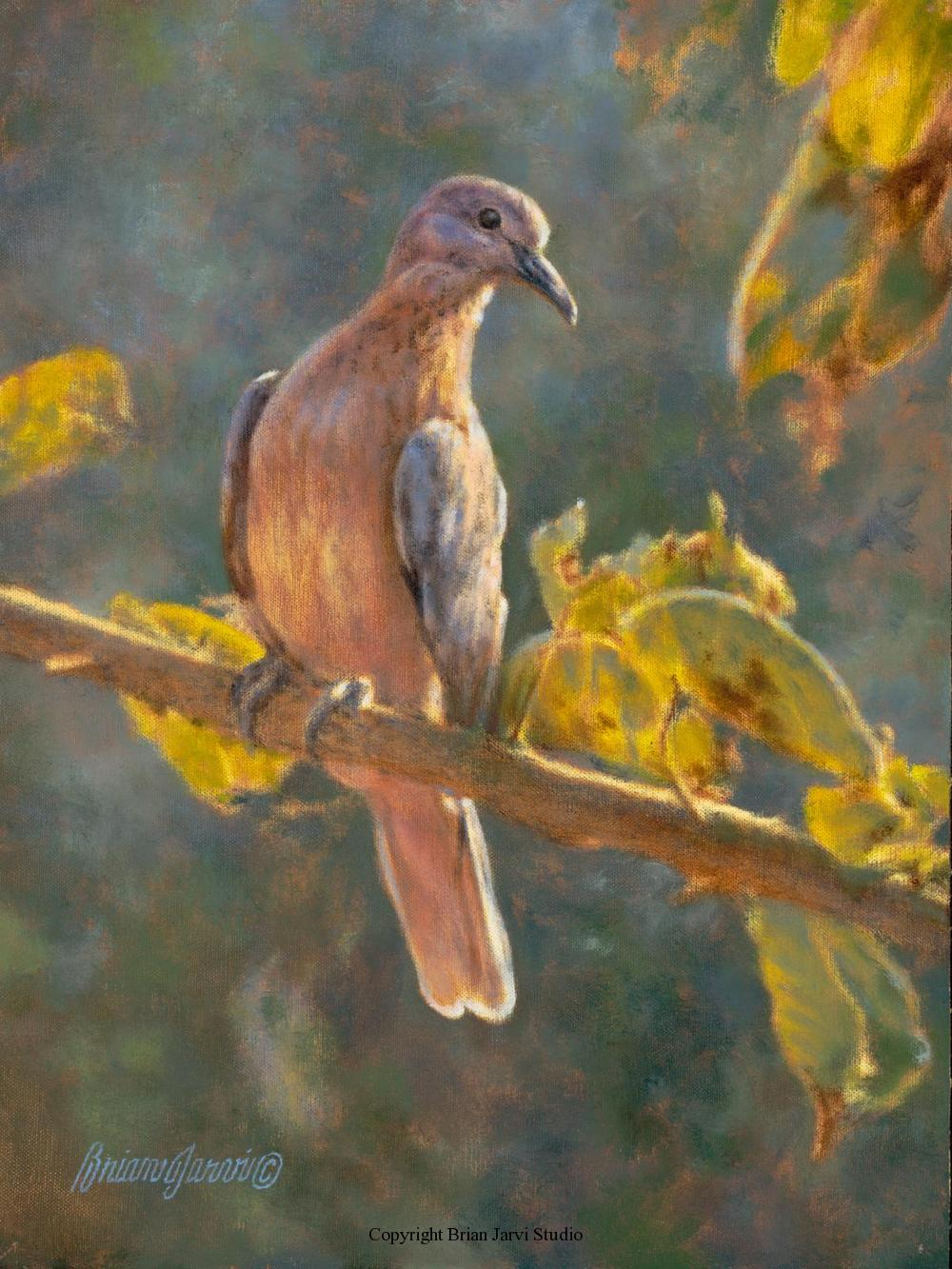 "Laughing Dove Pre-Study 9"" x 12"" <B><font size=""2"" color=""red""><br>  Brian Jarvi Studios Studies for African Menagerie Paintings Brian Jarvi Originals"