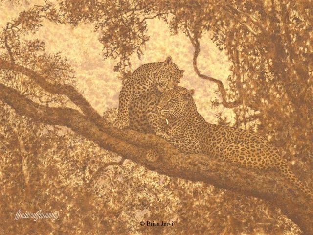 "Leopard Courtship Study <br> Original Oil 12"" x 16"" <B><font size=""2"" color=""red""><br>This Original is available.<br>Please call Brian at (218) 326-1308 for pricing information.</font></B> - Brian Jarvi Studios African Wildlife Original Art Brian Jarvi Artwork"