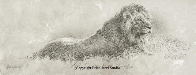 "Lion Repose Study 9"" x 23"" <B><font size=""2"" color=""red""><br>This Original has been sold and is in a private collection</font></B> - Brian Jarvi Studios Studies for African Menagerie Paintings Brian Jarvi Originals"