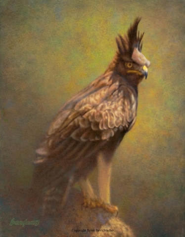 "Longcrested Eagle Pre-Study 14"" x 18"" <B><font size=""2"" color=""red""><br>This Original is available.<br>Please call Brian at 218-259-1333 for pricing information.</font></B> - Brian Jarvi Studios Studies for African Menagerie Paintings Brian Jarvi Originals"