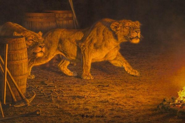 Man-Eaters of Tsavo - African Mainless Lions - Brian Jarvi Studios Brian Jarvi Artwork Limited Edition Prints