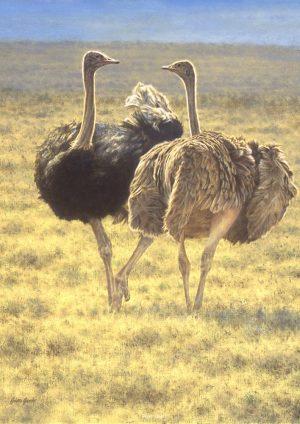 Mara Ballet  - Ostrich Dance - Brian Jarvi Studios Brian Jarvi Artwork Limited Edition Prints