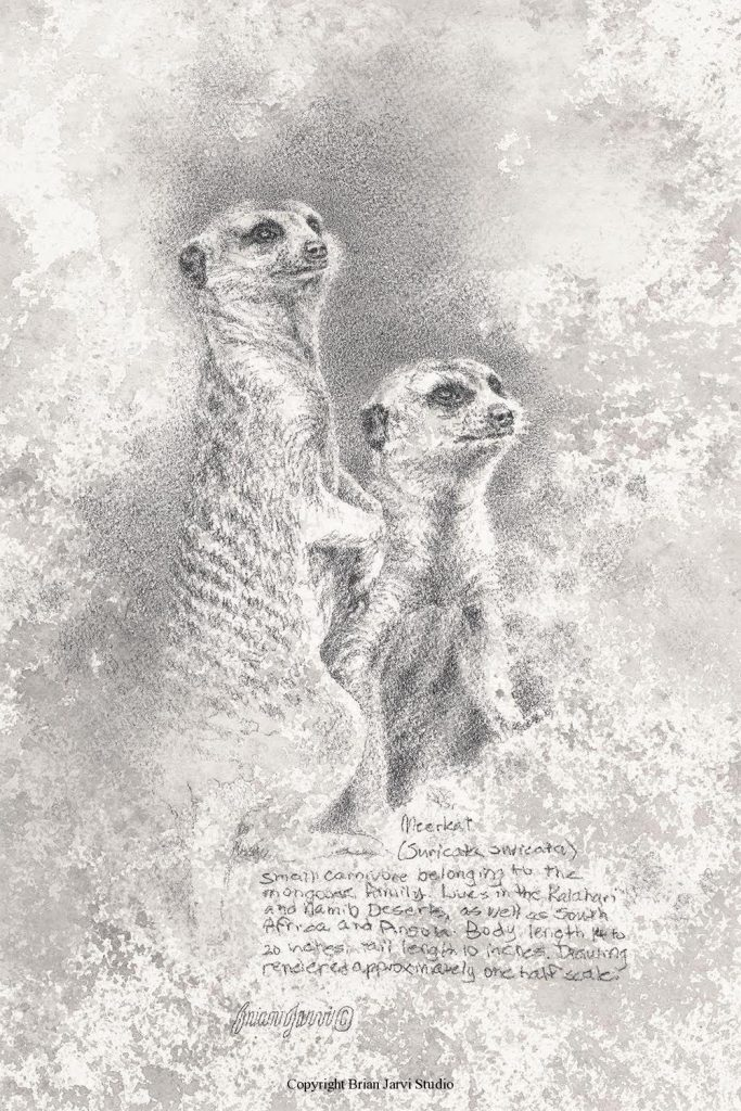 """Meerkat Study - 8"""" x 12"""" - Sold <B><font size=""""2"""" color=""""red""""><br>This Original has been sold and is in a private collection</font></B> - Brian Jarvi Studios Studies for African Menagerie Paintings Brian Jarvi Originals"""