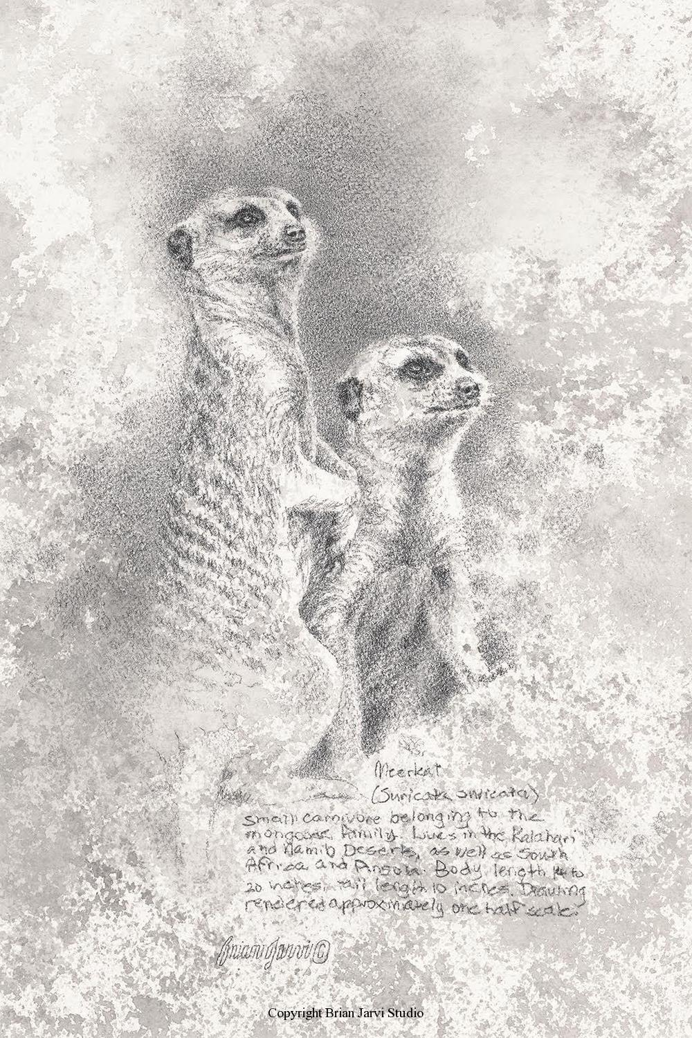 "Meerkat Study - 8"" x 12"" - Sold <B><font size=""2"" color=""red""><br>This Original has been sold and is in a private collection</font></B> - Brian Jarvi Studios Studies for African Menagerie Paintings Brian Jarvi Originals"