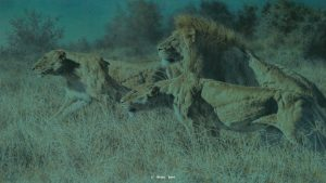Moonlight Malice - African Lions - Brian Jarvi Studios Brian Jarvi Artwork Limited Edition Prints
