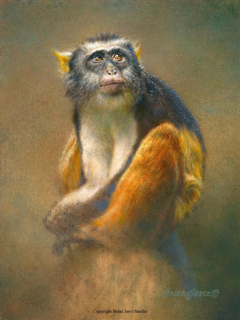 """Morgans Mona - 9"""" x 12"""" - Sold <B><font size=""""2"""" color=""""red""""><br>This Original has been sold and is in a private collection</font></B> - Brian Jarvi Studios Studies for African Menagerie Paintings Brian Jarvi Originals"""