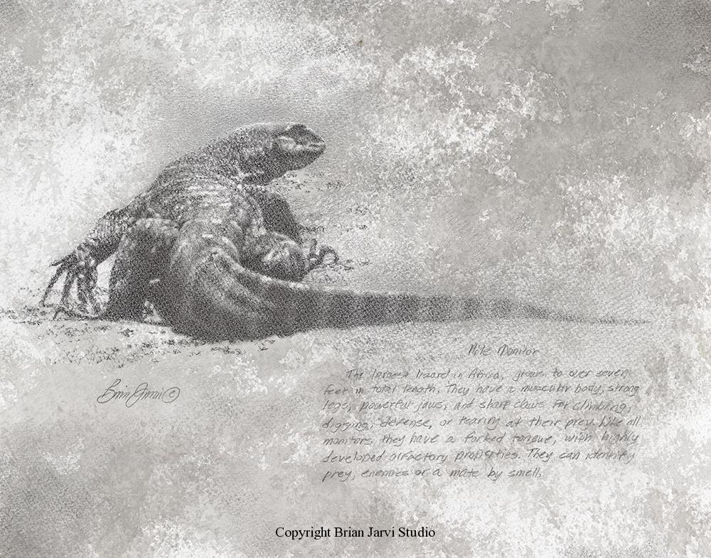 "Nile Monitor <br> 11""x14"" Original Pencil <B><font size=""2"" color=""red""><br>This Original is available.<br>Please call Brian at 218-259-1333 for pricing information.</font></B> - Brian Jarvi Studios Studies for African Menagerie Paintings Brian Jarvi Originals"