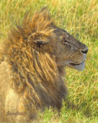 "Noble Profile - Lion <br> 8"" x 10"" <B><font size=""2"" color=""red""><br>This Original has been sold and is in a private collection</font></B> - Brian Jarvi Studios African Wildlife Original Art Brian Jarvi Artwork"
