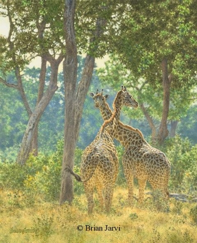 "Old Acquaintances - African Giraffes <br> Original Oil 16"" x 13"" <B><font size=""2"" color=""red""><br>This Original has been sold and is in a private collection</font></B> - Brian Jarvi Studios African Wildlife Original Art Brian Jarvi Artwork"