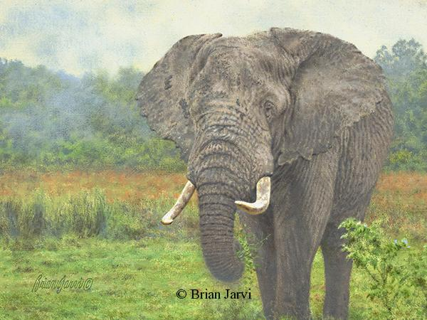 "Old Ivory - African Elephant <br> Original Oil 9"" x 12"" <B><font size=""2"" color=""red""><br>This Original is available.<br>Please call Brian at (218) 326-1308 for pricing information.</font></B> - Brian Jarvi Studios African Wildlife Original Art Brian Jarvi Artwork"