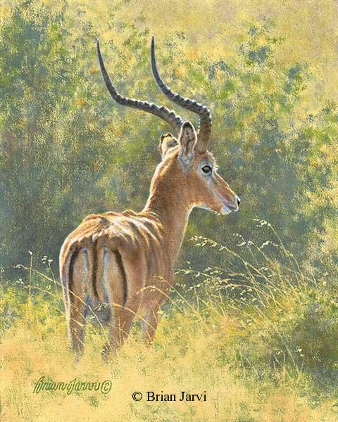"Predator Scent<br> Original Oil 8"" x 10"" <B><font size=""2"" color=""red""><br>This Original has been sold and is in a private collection</font></B> - Brian Jarvi Studios African Wildlife Original Art Brian Jarvi Artwork"