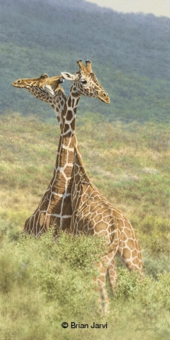 """Reticulated<br>Original Painting 15"""" x 30"""" <B><font size=""""2"""" color=""""red""""><br>This Original has been sold and is in a private collection</font></B> - Brian Jarvi Studios African Wildlife Original Art Brian Jarvi Artwork"""