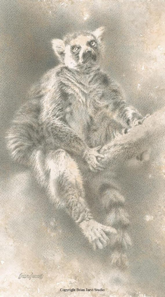 """Ring-tailed Lemur Study <br> 10""""x 18"""" Original Pencil - Sold <B><font size=""""2"""" color=""""red""""><br>This Original has been sold and is in a private collection</font></B> - Brian Jarvi Studios Studies for African Menagerie Paintings Brian Jarvi Originals"""