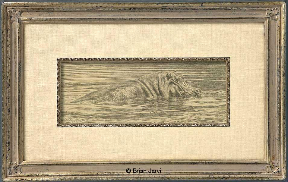 "River Horse - Hippo<br>Original Pencil 13"" x 5"" <B><font size=""2"" color=""red""><br>This Original has been sold and is in a private collection</font></B> - Brian Jarvi Studios African Wildlife Original Art Brian Jarvi Artwork"