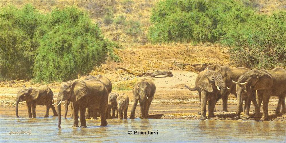 "River of Life - African Elephants<br> Original Oil 12"" x 23"" <B><font size=""2"" color=""red""><br>This Original has been sold and is in a private collection</font></B> - Brian Jarvi Studios African Wildlife Original Art Brian Jarvi Artwork"