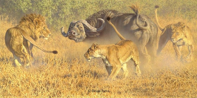 "Savage Land - Lions and Buffalo <br>Original Oil 18"" x 12"" <B><font size=""2"" color=""red""><br>This Original has been sold and is in a private collection</font></B> - Brian Jarvi Studios African Wildlife Original Art Brian Jarvi Artwork"