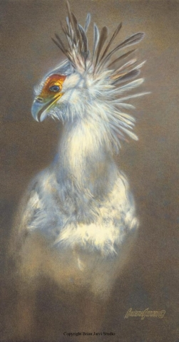 "Secretary Bird <br>12""x 23"" Original Oil - Sold <B><font size=""2"" color=""red""><br>This Original has been sold and is in a private collection</font></B> - Brian Jarvi Studios Studies for African Menagerie Paintings Brian Jarvi Originals"
